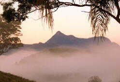 Mt Warning at dawn from Hillcrest
