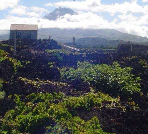 view of mountain, Pico, Casa da Barca. Private backyard enjoys the full view of the mountain