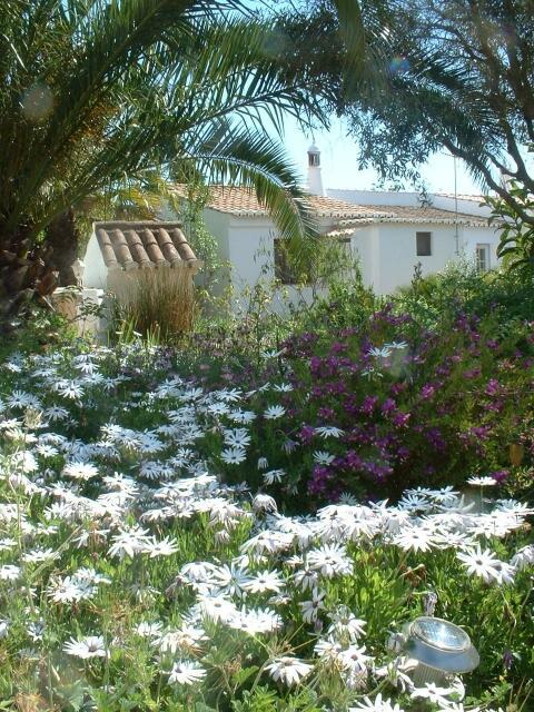 One of Monte Rosas garden views.
