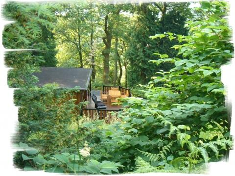 Blelham Tarn lies in secluded woodland. Deer often visit to feed close to the deck area.