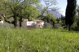 Property Photo: Cervano with wild orchids
