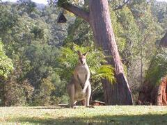 Property Photo: Wallaby