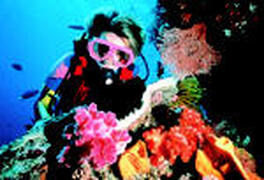 Scuba Diving on Great Barrier Reef