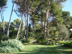 paisage in Mallorca