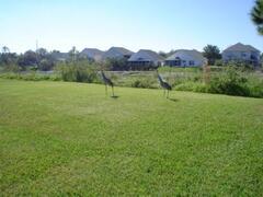 Cranes in our Garden