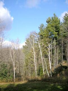 Property Photo: Another view from our deck at New England Vermont house rental amoingst maples, birches and evergreens