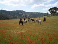 Our horses in the poppy fields