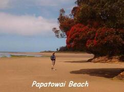 Property Photo: Papatowai Beach