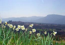 amzing garden view of Barga
