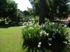 A corner of the private park