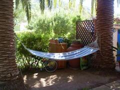 Back garden, relaxing in the shadow
