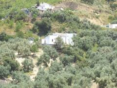 Los Tiros among the olive groves