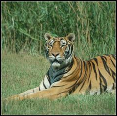 El Vergel Safari Park