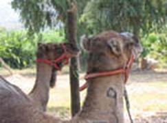 los Arcos - The Arc Animal Rescue Centre, Guadalest
