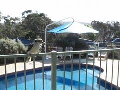 Property Photo: Birdlife