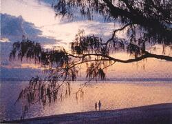 Beautiful Oak Beach