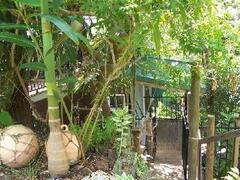 The Tree House Steps