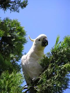 Enjoy Local Birdwatching
