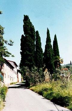 Via dei Tallini. La Villetta is beyond the cypress trees