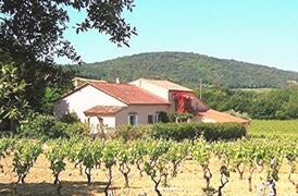 Property Photo: THE PROVENCAL FARM HOUSE MIDDLE OF VINEYARD