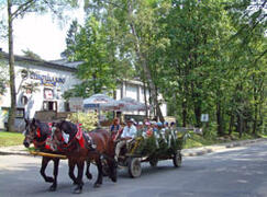 Horse and cart rides during summer, sleigh rides in winter