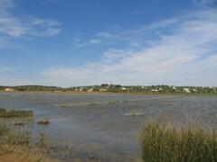 Salgados Marshes