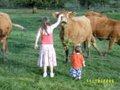 Feeding the local cows