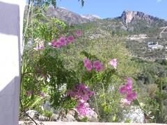 view from the garden to Mount Maroma