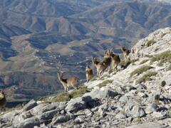 near the summit of Maroma