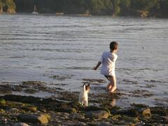 Helford river is doggy paradise!