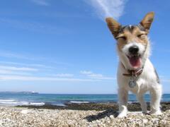 Meudon beach is dog-friendly all year