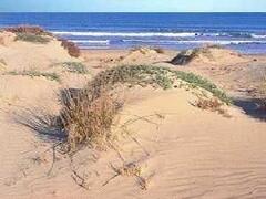 beach (the dunes)