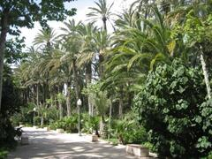 Elche. The most famous palm trees park in the world(Treasure of Humanity)