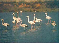 Flamingos at las salinas park