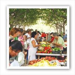 Oliva Market Spain
