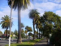 Property Photo: Famous Napier Palms outside Apartment