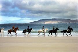 Fancy a horse riding lesson