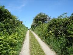 Lane up to cottage