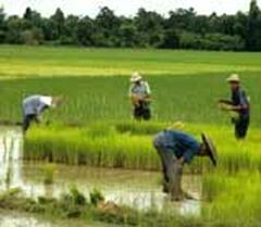 Property Photo: Our rice paddies