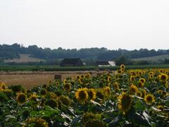 Property Photo: summer sun flowers