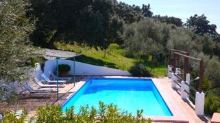 Pool in the Olive Grove