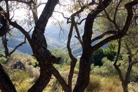 A walk in the surrounding olive groves.
