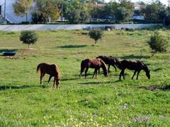 Horse riding nearby (300 meters)