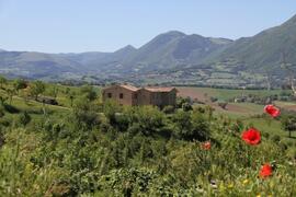 Panorama with poppys
