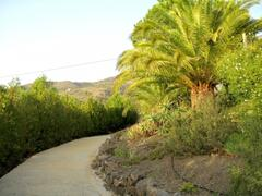 walking path by the house with garden