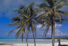 Cat Island beach and palms