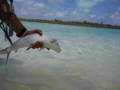 Bonefish on the fly
