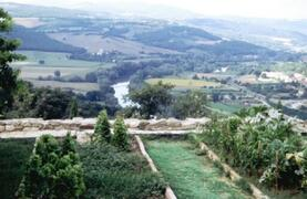 orchard with view