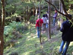 'Bush' Walk