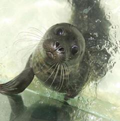 Visit the Cornwall Seal Sanctury in Gweek, 15 mins drive